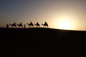 men and camels